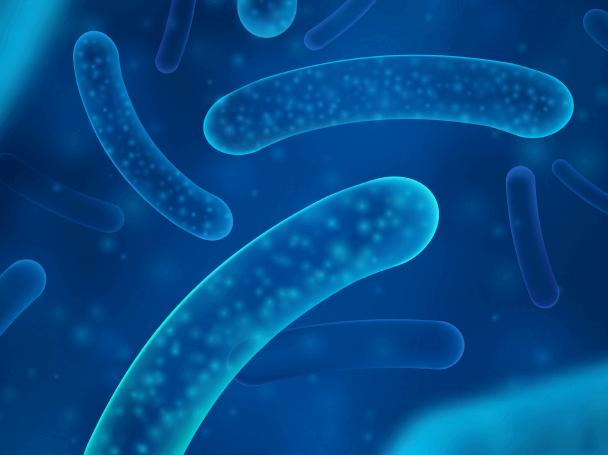 Escherichia coli (ATCC 8739)